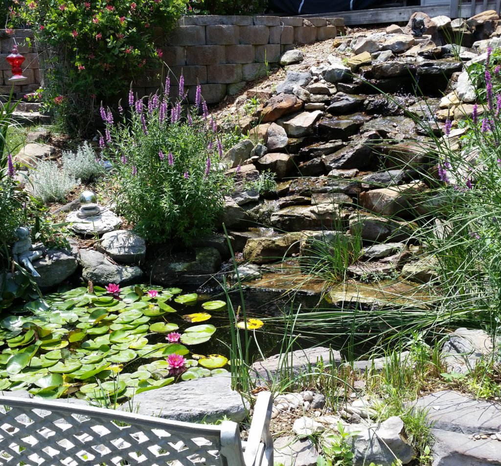 We build beautiful ponds!