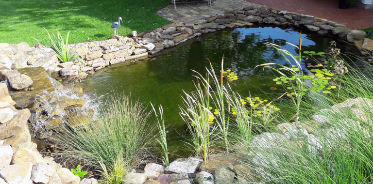 established-watergarden-with-lilies-and-grasses