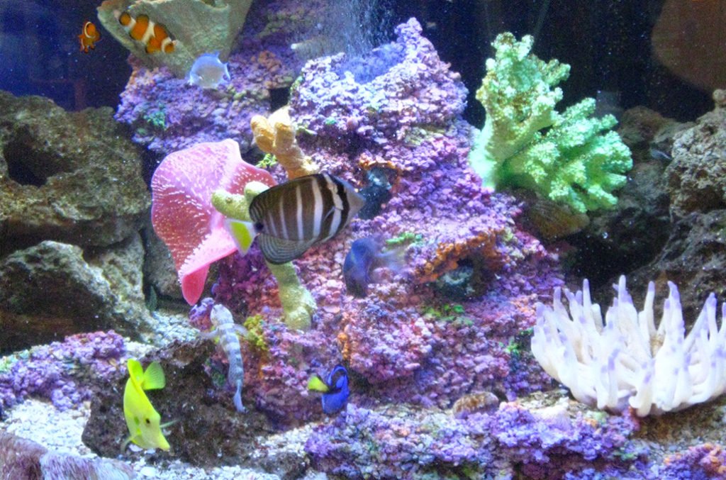 Wichita Aquarium Maintenance Cleaner Of Fresh Saltwater Fish Tanks