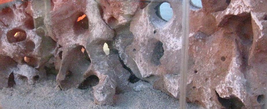 Cichlid cave aquarium