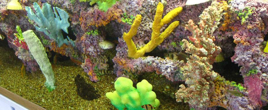 freshwater coral aquarium decoration